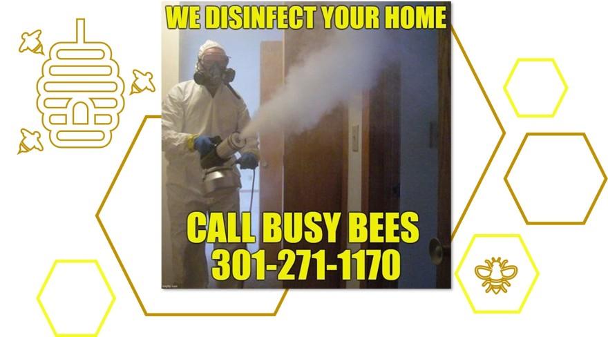 busy bees hexa
